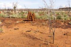 Duzi termitów anthills Australia, odludzie, terytorium północne zdjęcie royalty free
