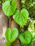 Duzi zieleni liście Obrazy Royalty Free