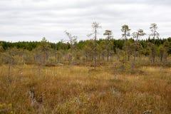 Dvärgen sörjer i träsket Arkivfoto
