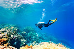 Dver swimming under water. Female scuba diver swimming under water Stock Image