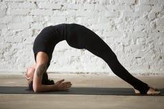 年轻Dvi Pada Viparita Dandasana姿势的信奉瑜伽者可爱的妇女 免版税库存图片