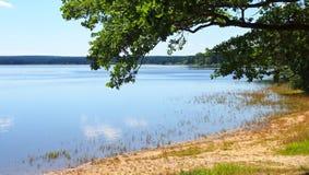 Dvoriste池塘看法在Trebon市附近的 免版税库存图片