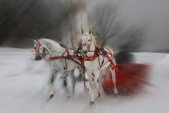 dwóch białych koni. Zdjęcia Royalty Free