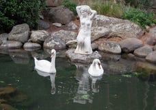 Dwa łabędź w stawie z antykwarską rzeźbą Zdjęcia Royalty Free