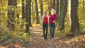 Dwa ładnej dziewczyny chodzi w jesień parku Uśmiechnięte dziewczyny nad jesieni naturalnym tłem Bawić się w jesień parku zbiory