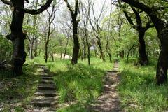 Dwa ścieżek prowadzenie różni kierunki zdjęcie stock