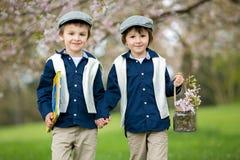 Dwa ślicznego dziecka, chłopiec bracia, chodzi w wiosny wiśni blos Zdjęcia Royalty Free
