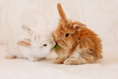 Dwa Ślicznego Małego królika Zdjęcie Royalty Free