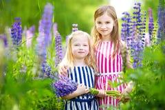 Dwa ślicznej małej siostry w kwitnącym lupine polu Zdjęcie Royalty Free