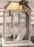 Dwa ślubnej gołąbki jako miłość symbol Zdjęcie Royalty Free