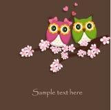 Dwa śmieszny, kochają sowy Zdjęcie Royalty Free