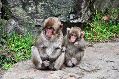 Dwa śniegu małpiego dziecka, Jigokudani, Nagano Fotografia Royalty Free