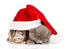 Dwa śpią figlarki z Santa kapeluszem Odizolowywający na białym backgroun Fotografia Stock