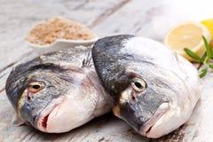 Dwa świeża ryba. Zdjęcia Stock