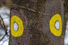 Dwa żółty blask na śladzie zdjęcia royalty free