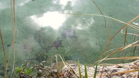 Dwa żółwia w stawie blisko brzeg w dobrej pogodzie Wysoki kąt Odbicie słońce i niebo w wodzie zdjęcie wideo