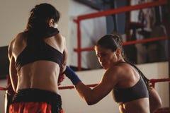 Dwa żeńskiego boksera walczy w pierścionku obrazy stock