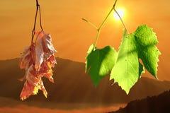 Dwa życie sceny na liściach fotografia stock