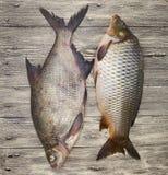Dwa żywej ryba wielki świeży karpiowy lying on the beach na drewnianej desce fotografia stock