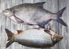Dwa żywej ryba wielki świeży karpiowy lying on the beach na drewnianej desce zdjęcie royalty free