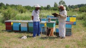Dwa apiarists, pszczelarki sprawdzają pszczoły na honeycomb drewnianej ramie zbiory wideo
