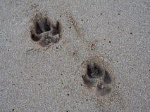 Dwa łapy Psi druk w piasku Obraz Royalty Free