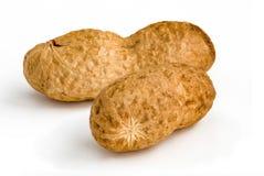 Dwa arachidu - odosobnionego Obrazy Royalty Free