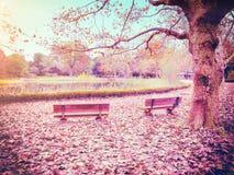Dwa ławki w kolorowej jesieni Obrazy Royalty Free