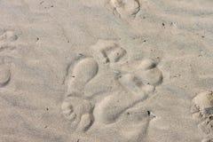 Dwa bardzo odrębnego odcisku stopy w piasku przy plażą iść w opposite kierunkach - tło Zdjęcie Stock