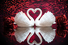 Dwa białego uroczego łabędź Zdjęcia Royalty Free