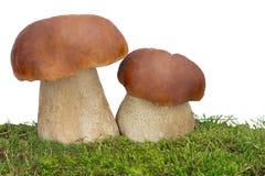 Dwa biały grzyb na zielonej trawie. Przedstawiający na białym backgr Zdjęcie Royalty Free
