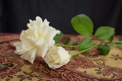 Dwa białych róż wciąż życie obrazy royalty free