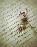 Dwa blakną kwiatu na starym pisma writing Obraz Stock