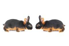 Dwa brown królik Obraz Royalty Free