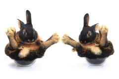 Dwa brown królik Obrazy Royalty Free