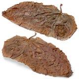 Dwa brown liść Zdjęcia Stock