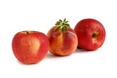 Dwa brzoskwini i jabłka Fotografia Stock