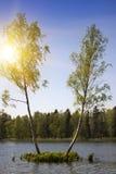 Dwa brzozy drzewa r na małej wyspie po środku lasowego jeziora Gatchina, St Petersburg, Rosja Zdjęcie Royalty Free