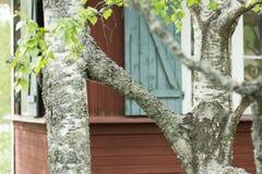 Dwa brzozy drzewa R Wpólnie Obrazy Royalty Free