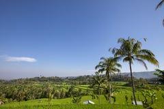 Dwa budy w bujny zielenieją Ryżowego tarrace w Sidemen, Bali, Indonezja zdjęcie stock