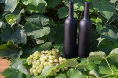 Dwa butelki wino stojaki przeciw zielonym li?ciom winnica ocet naturalny nap?j, intymni winnicy naturalny nap?j, zdjęcia royalty free