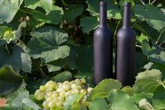 Dwa butelki wino stojaki przeciw zielonym li?ciom winnica ocet naturalny nap?j, intymni winnicy naturalny nap?j, fotografia royalty free