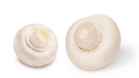 Dwa całej kultywującej pieczarki (Agaricus Bisporus) Zdjęcia Stock