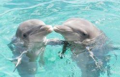 Dwa całują delfinu fotografia stock
