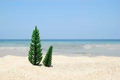 Dwa choinki na białym piasku wyrzucać na brzeg na tle błękitny morze i niebie na słonecznym dniu obraz royalty free