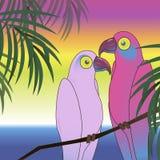 Dwa colourful papuzi ptasi tło ilustracji