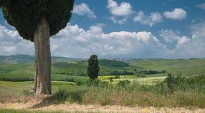 Dwa cyprysu w szerokim toskanka krajobrazie Fotografia Royalty Free