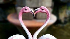 Dwa czapli Egret miłość stoi przed parkiem Obraz Stock