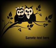Dwa czarny i biały sowy Obrazy Royalty Free