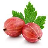 Dwa czerwieni agrestowa jagoda z liściem na bielu Zdjęcia Royalty Free